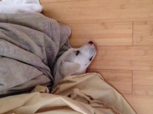 Elsa hiding